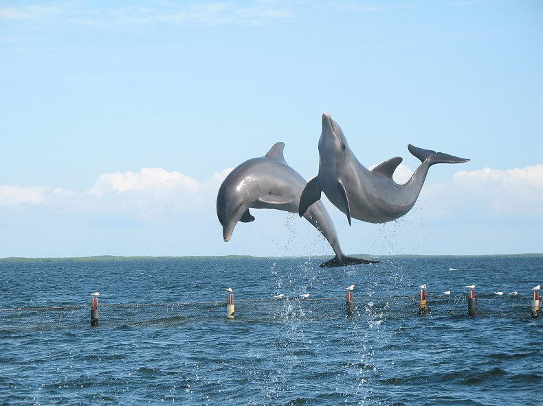 Dolphin Facts For Kids | Dolphin Habitat & Diet