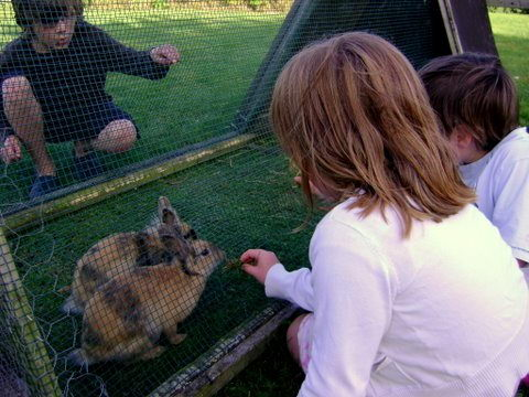 Girl feeding a bunny what to feed rabbits