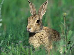 what do rabbits eat | what do bunnies eat