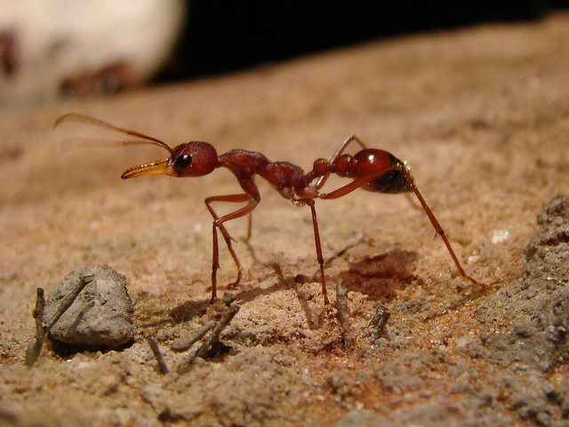 ant facts for kids | Ant