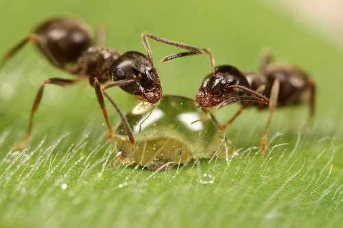 ant facts for kids | ANts