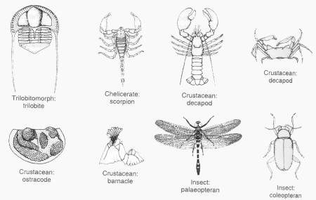 Arthropods pictures - Arthropods Facts for kids