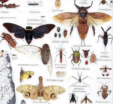 Facts About Insects for Kids - characteristics of insects - classification of classification