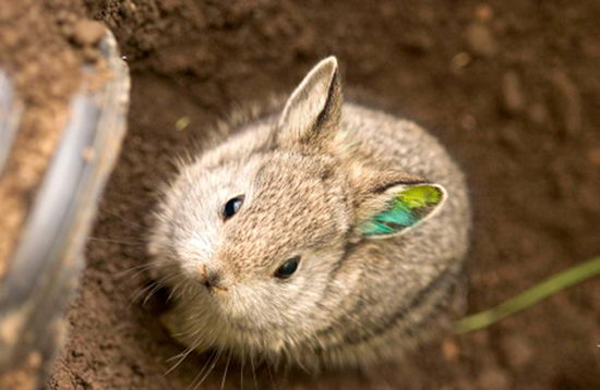 rabbit facts for kids   pictures of rabbits