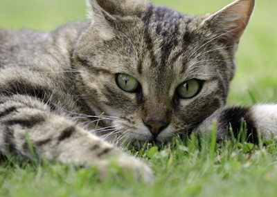 interesting facts about cats for kids