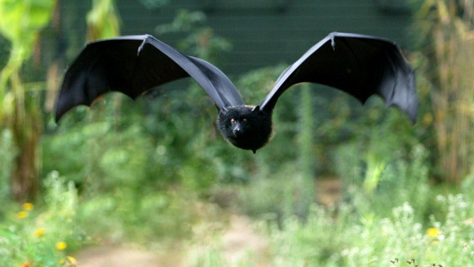 facts about bats for kids - bat flying