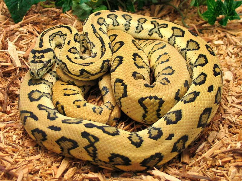 fun facts about snakes for kids