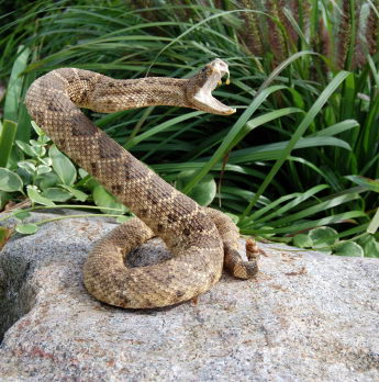facts about snakes for kids