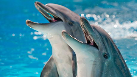 dolphins teeth - facts about dolphins for kids