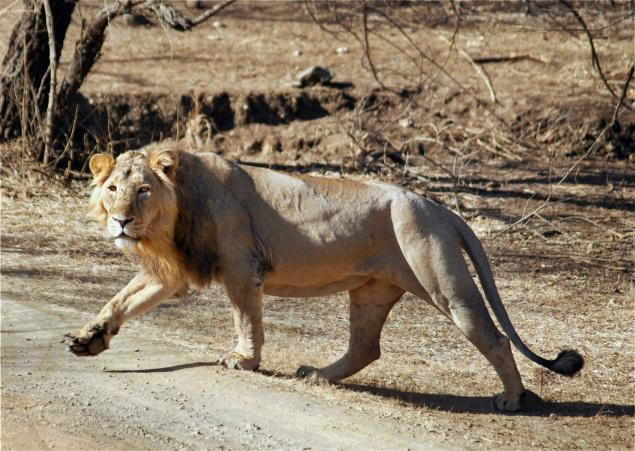 critically endangered animals in india