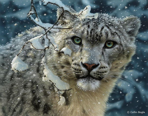 what is snow leopard | snow leopard