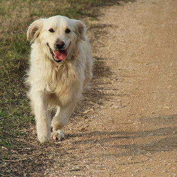 dog is running - when do dogs stop growing