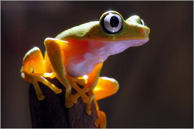 amazing frog facts for kids | frogs