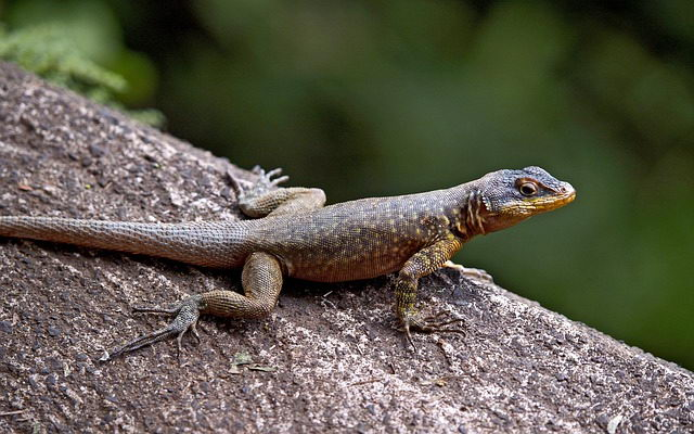Lizard Facts For Kids Fun Facts About Lizards For Kids