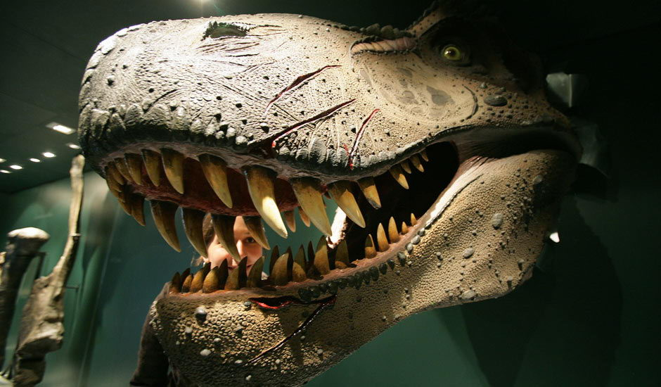 What Did Dinosaurs Eat | Dinosaurs Diet - Animals Time