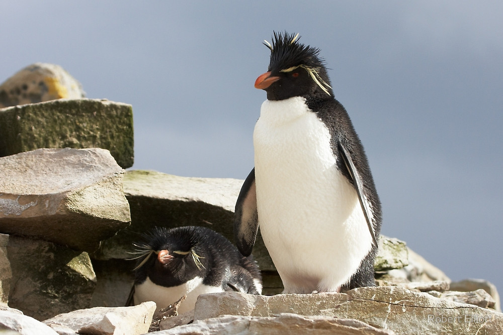 penguin facts for kids