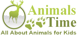 Animals Time - All About Animals